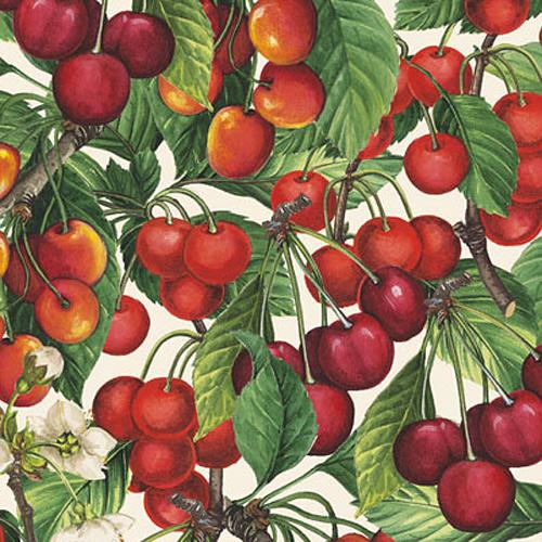 Kirschen Grafiche Tassotti Papier