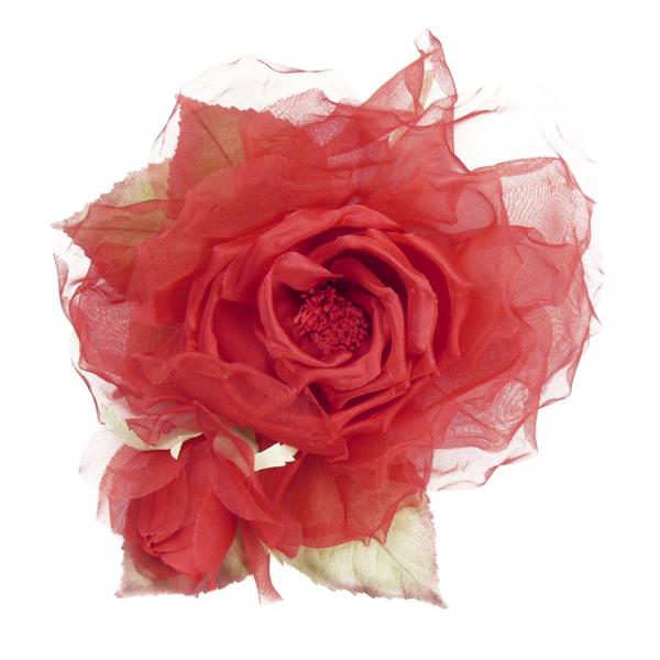 Rose rot in üppiger Größe von Heinz Müller