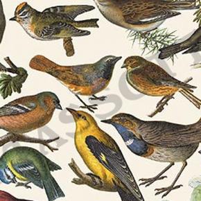 Vögel Papier von Grafiche Tassotti