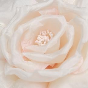 Ansteck-Rose cremefarben von Heinz Müller