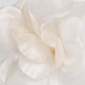 Ansteckblüte weiß von Heinz Müller