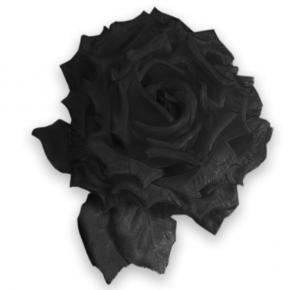 gefüllte Ansteck-Rose schwarz von Heinz Müller